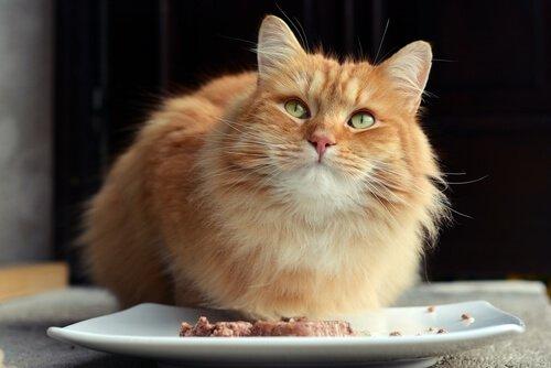 Der Katze schmeckt es.