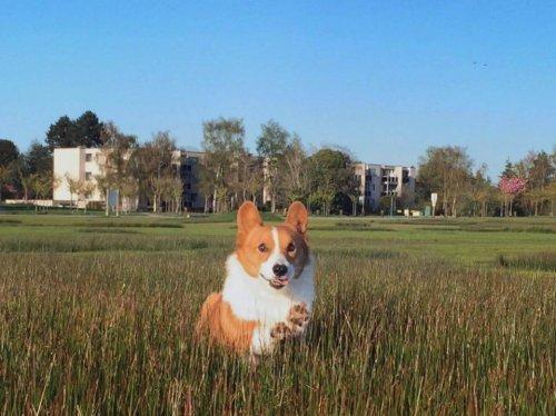 Zum Tod von Loki, einem der berühmtesten Hunde im Internet