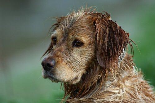 Kann man den Geruch von nassem Hund vermeiden?