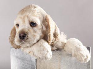 Die altersgerechte Ausbildung von Hunden im Welpenalter.