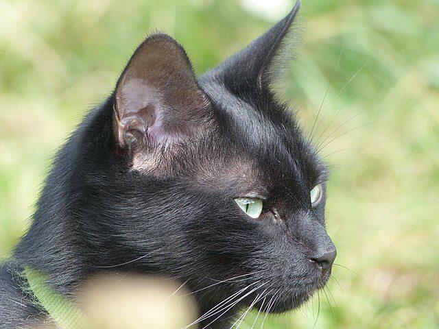 Fellfarben der Katze: eine breite Palette