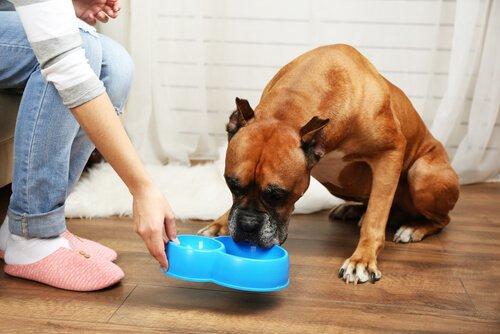 Die notwendigen Nährstoffe für ältere Hunde: Vitamin C.