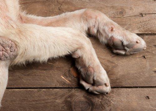 Ein Hund geht auf zwei Beinen.