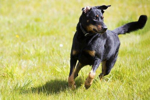 Einen selbstständigen Hund erziehen