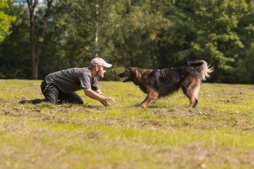 Einen selbstständigen Hund erziehen heißt nicht aufgeben!