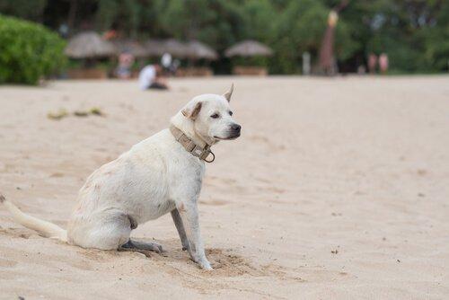 Epilepsie bei Hunden: Ursachen und Behandlung