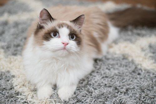 Welche Erziehung braucht eine Katze zu Hause?