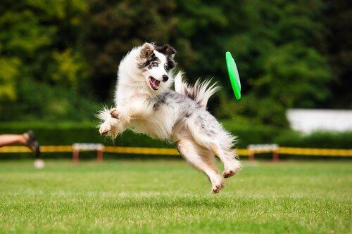 Fitness mit einem epileptischen Hund