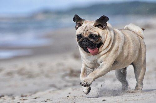 Frank, einer der berühmtesten Hunde.