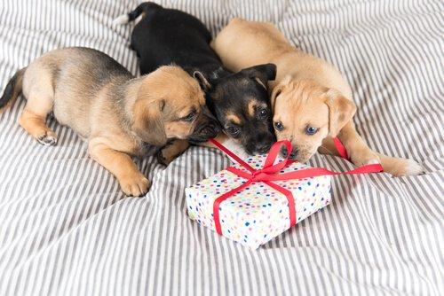 Welches Geschenk mache ich meinem Haustier?