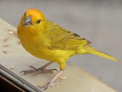 Wie man das Geschlecht eines Vogels erkennt