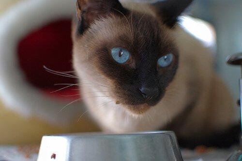 Hausrezepte für Katzen