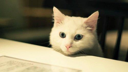 Ideale Haustiere für Wohnungen