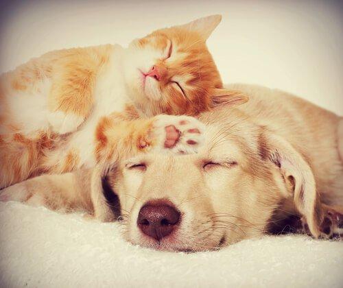 Können Hund und Katze nicht zusammenleben?
