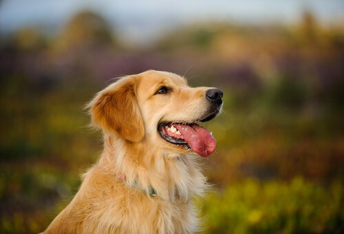 Herzlichkeit in Hundeform