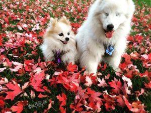 Hoshi hat eine Glaukom-OP als blinder Hund überlebt.