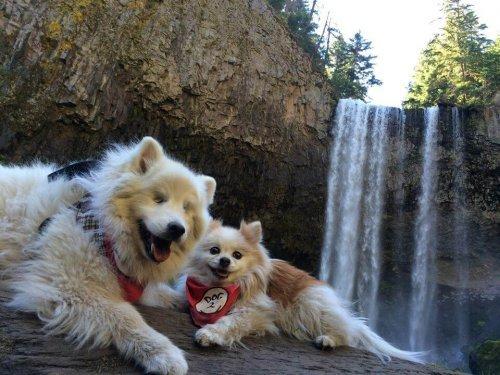 Hoshi, ein blinder Hund und sein Blindenhund Zen