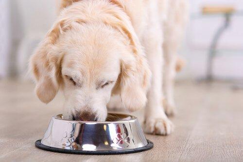 Was fressen Hunde im Winter?