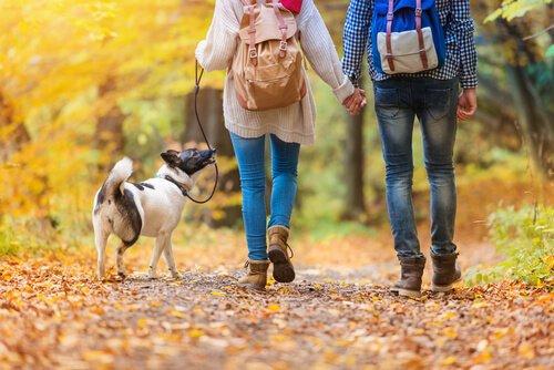 Gehen Hunde im Winter auch spazieren?