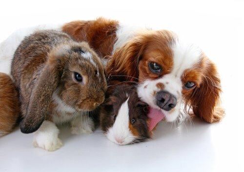 Können Hund und Hase nicht zusammenleben?