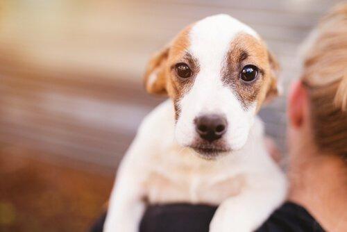 Leptospirose bei Hunden