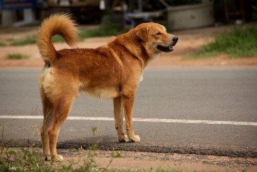 Verlorener Hund sucht Zuhause.