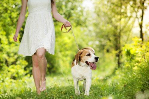 Hund und Mensch im Gleichgewicht