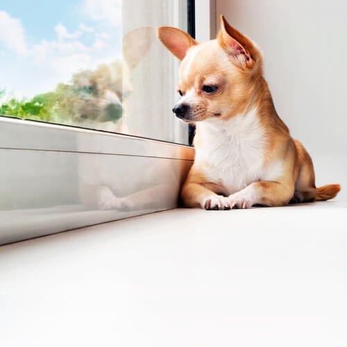 Ratschläge, wenn dein Hund viel Zeit alleine verbringt