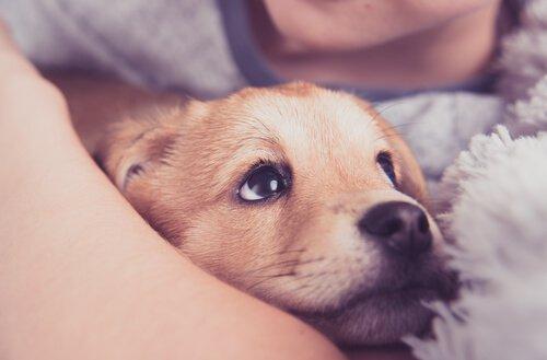 Was tun vor der Adoption eines Hundes?