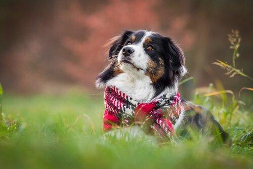 Hunde im Winter: Überlegungen und Ratschläge