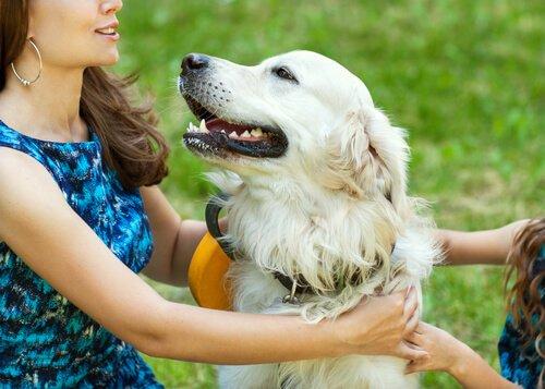Ja! Hunde spüren Liebe!
