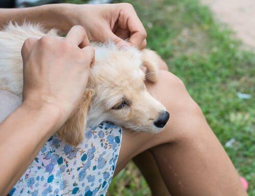 Wunden bei Hunden behandeln
