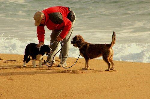 Joggen mit dem Hund - 10 Tipps