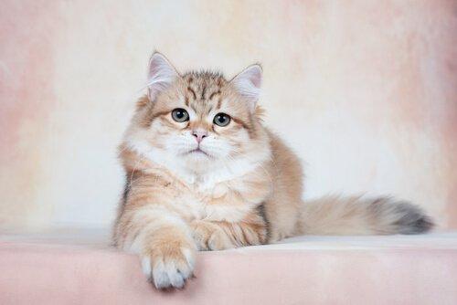Katze in einer Mietwohnung halten.