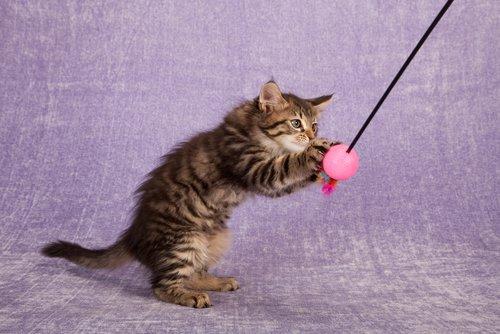 Katzen spielen sehr gerne