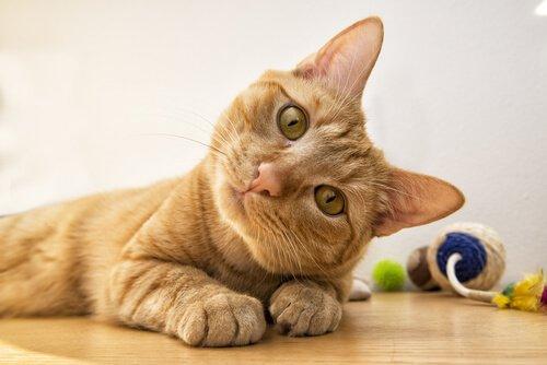 Was bedeuten die verschiedenen Gesichtsausdrücke der Katze?