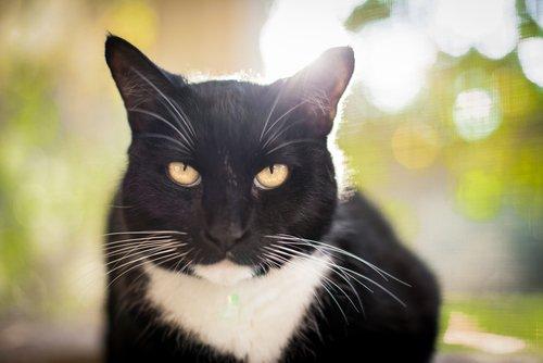 Es ist wichtig, die Gesichtsausdrücke unserer Katzen deuten zu können.