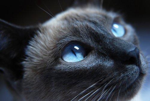 Wenn du lernst, die Gesichtsausdrücke von Katzen zu lesen, wirst du deine Freunde besser verstehen.