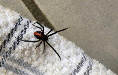 Warum du niemals eine Spinne zu Hause töten solltest