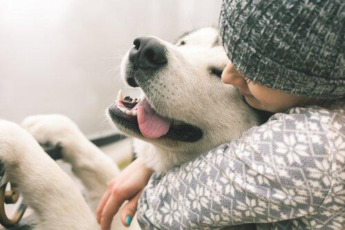 Spüren Hunde Liebe? Was sagt die Wissenschaft?