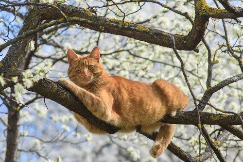 Katzen leben frei