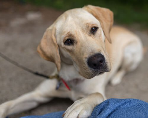 Marley, einer der berühmtesten Hunde.
