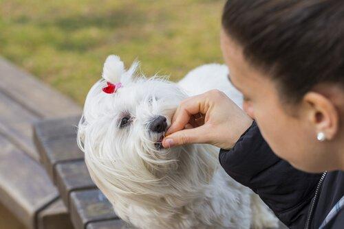 Medizin für den Hund