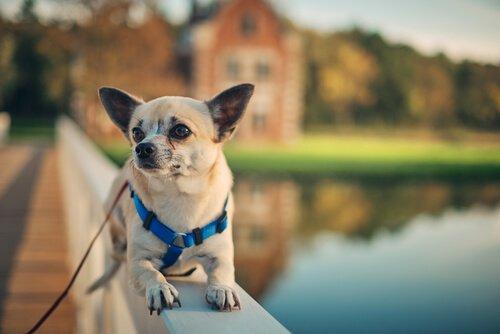 Neue Freunde im Airbnb für Hunde