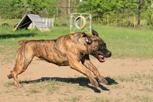 Nicht anerkannte Hunderassen nach FCI-Klassifizierung