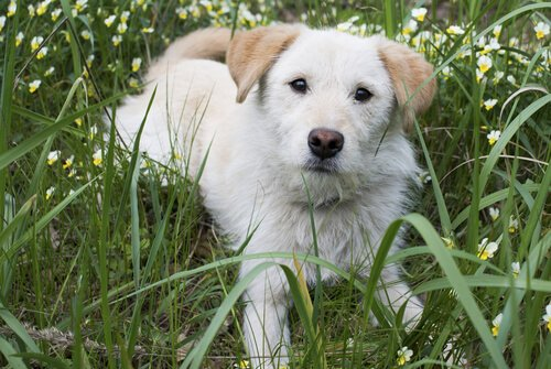 Was ist die Nickhaut bei Hunden?