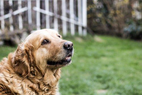 Grundlegende Tipps zur Pflege eines älteren Hundes