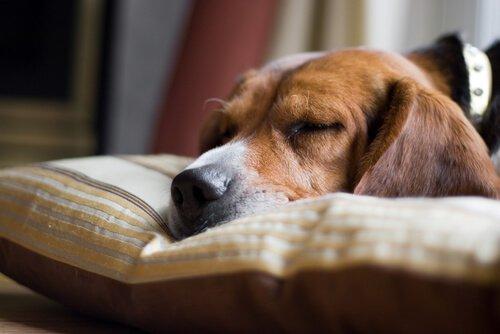 Hauptursachen für den plötzlichen Hundetod