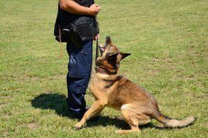 Schutzhunde für Frauen durchlaufen eine spezielle Ausbildung.