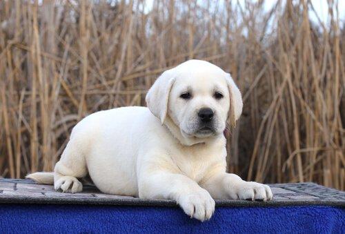 Einer der berühmtesten Hunde.